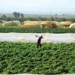 alt Jordan's countryside