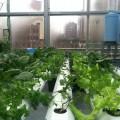 alt supermarket rooftop garden