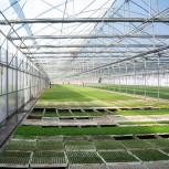 alt Greenhouse
