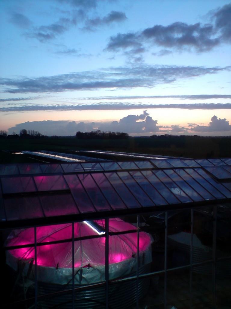 LED lights in the algae tanks