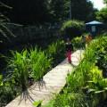 alt Baima canal restorer