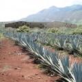 alt Tequila distillery