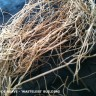 Agava fibers