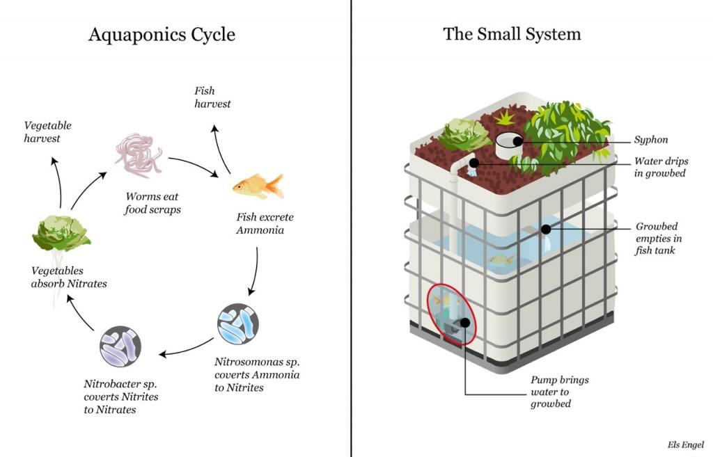 Aquaponics system drawing