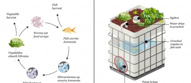 Aquaponics system drawing