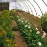 Water reused in greenhouse
