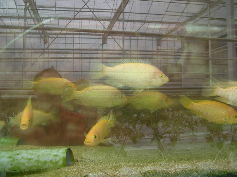 Fishes in a greenhouse